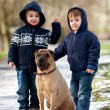 Two Little boys with their dog in the park — Stock Photo #56485719