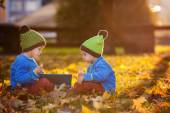 Two boys, reading a book on a lawn in the afternoon — Stok fotoğraf