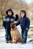 Two Little boys with their dog in the park — Stock Photo