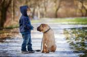 Little boy with his dog in the park, feeding him — Stock Photo