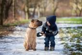 Boy with cute dog, giving him a kiss  — Stockfoto