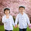 Two adorable caucasian boys in a blooming cherry tree garden, sp — Stock Photo #70902101