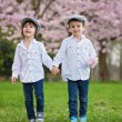 Two adorable caucasian boys in a blooming cherry tree garden, sp — Stock Photo #70902577