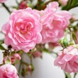 Small pink roses in a vase, texture background — Stock Photo #76260247