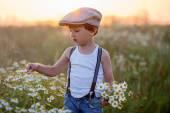 Lindo garotinho no campo de Margarida no pôr do sol — Fotografia Stock