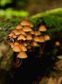 蘑菇在 moss 上 — 图库照片