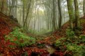 Autumn Misty Forest with Leafage  — Stock Photo