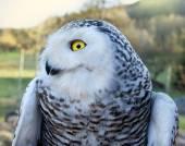 Owl Look — Stock Photo