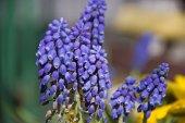 青い花 — ストック写真