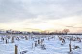 Rural village home in winter time next to cornfield — Zdjęcie stockowe