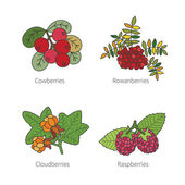 Set of vector doodle pied berries isolated on white — Stock Vector