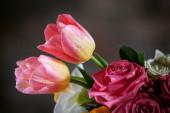Krásné tulipány kapkami vody — Stock fotografie