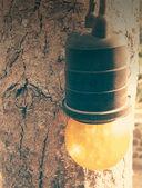 Retro bulb at the tree — Stockfoto
