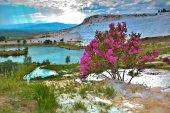 Flowering bush — Stock Photo