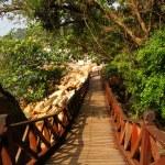 Wooden bridge — Stock Photo #53819083