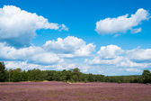 Landscape with blue sky, clouds, trees and and heide meadow — Stock Photo