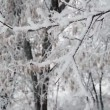 Shaking small tree covered with snow — Stock Video #60284619