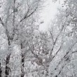 Hoarfrost on tree branches — Stock Video #60284625