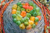 Physalis harvest — Stockfoto