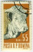 Stamp with cow — Stock Photo