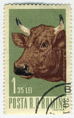 Stamp with bull — Stock Photo