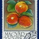 Постер, плакат: Stamp printed in the Hungary