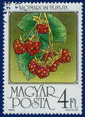 Stamp printed in the Hungary — Foto Stock