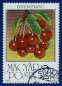 Stamp printed in the Hungary — Stockfoto