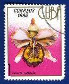Stamp printed in the Cuba — 图库照片