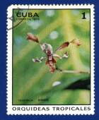Stamp printed in the CUBA — Foto de Stock