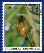 Stamp printed in the CUBA — Stockfoto
