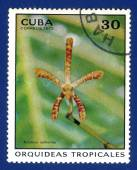 Stamp printed in the CUBA — Foto Stock