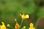 Insect on yellow flower — Stock Photo