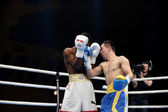 World series of boxing: Ukraine Otamans vs Cuba Domadores — Stok fotoğraf