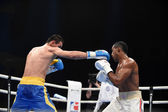 World series of boxing: Ukraine Otamans vs Cuba Domadores — Stock Photo