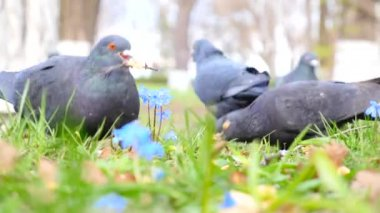 Birds on the green grass — Video Stock