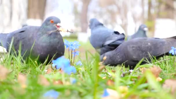 Birds on the green grass — Vidéo