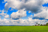 Landscape with green grass and  windmil — Stock Photo