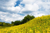 Meadow of summer flowers with cloudy sky — ストック写真