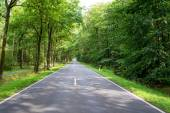 Road in the forest — Stock Photo