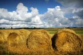 Осенняя природа, поля — Стоковое фото