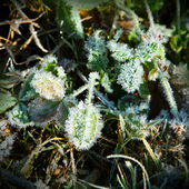 Green leaves in frost — Stock Photo