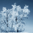 Winter trees in park — Stock Photo #53282371