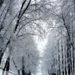 Winter trees in park — Stock Photo #53282891