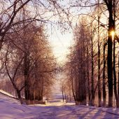 Winter trees in park — Stock Photo