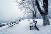 Drzewa i stół w śniegu — Zdjęcie stockowe