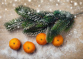 Tangerine and branches of a Christmas tree — Stock Photo
