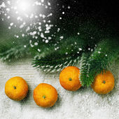 Tangerine and branches of a Christmas tree — Stock fotografie