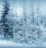 Winter nature, forest — Stock Photo