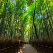 Постер, плакат: Bamboo Groves